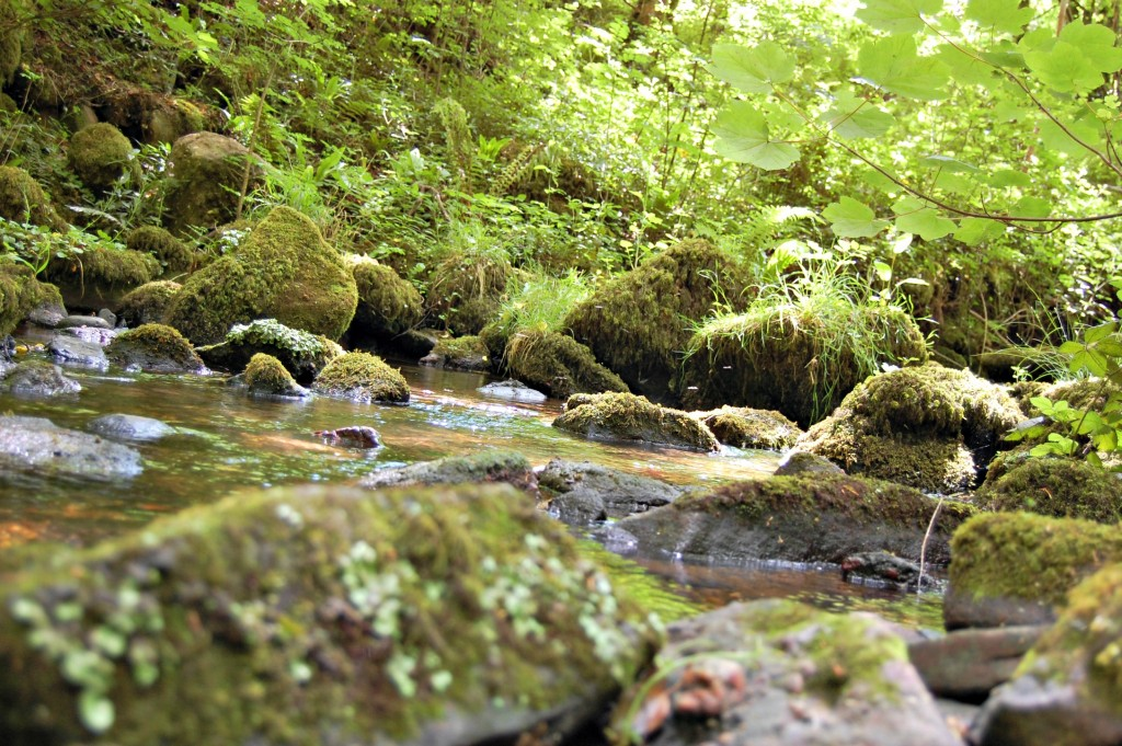 Merrell - Stream