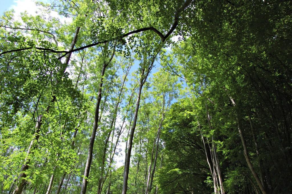 Merrell - woods